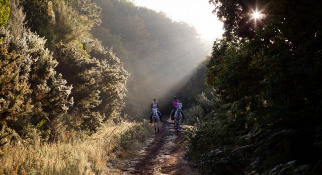 A ride at dawn in the Unesco-listed Laurisilva forest. Photo: Oliver Martin