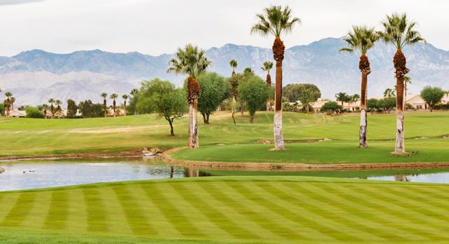Indian Canyons Golf Resort, where Sinatra used to play. Photo: Brad Torchia