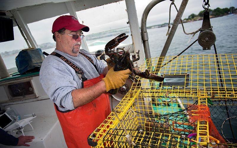Fisherman Mark Ring has been a lobster fisher for almost 45 years. Photo: Nicklas Gustafsson