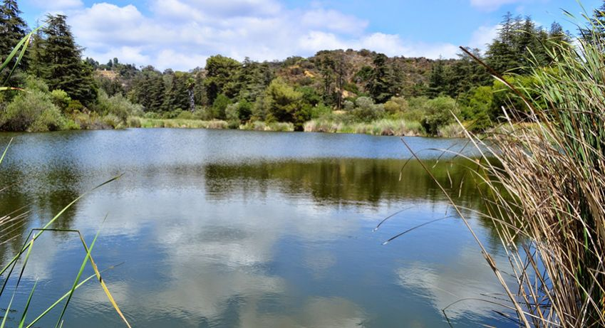 One of  two lakes at beautiful Fraklin Canyon. Photo: Shutterstock