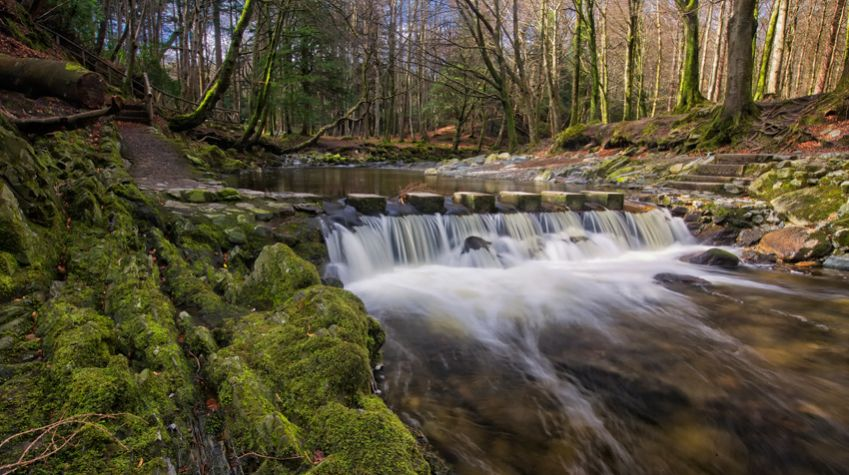 Tollymore Forest Park.
