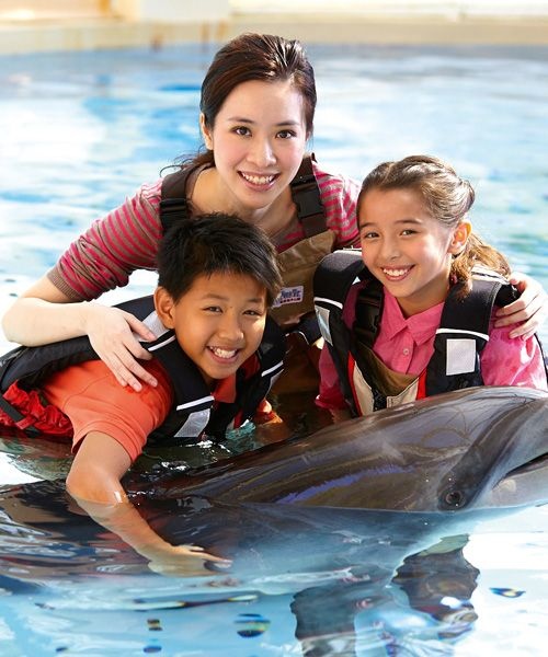 Dolphin encouter at the Ocean Park.