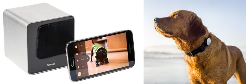 Left: PetCube. Right: Whistle.