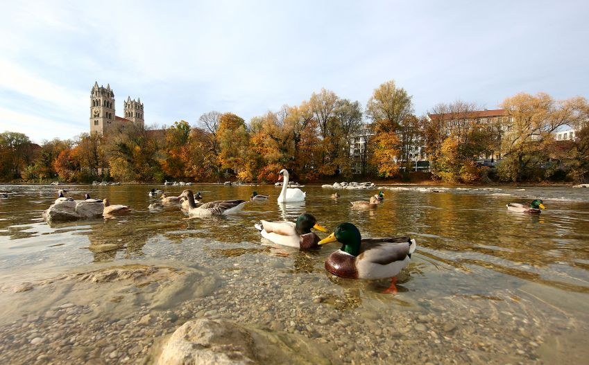 The water in the Isar has been purified with ultraviolet radiation and is now totally clean. Photo: München Tourismus/Sigi Müller