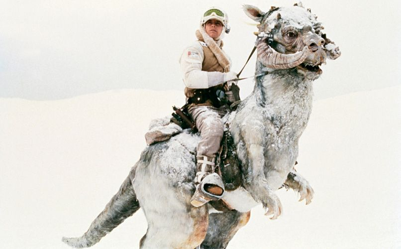 Luke Skywalker on his tauntaun, which smells better on the outside than on the inside. From Star Wars: Episode V – The Empire Strikes Back. Photo: Getty Images