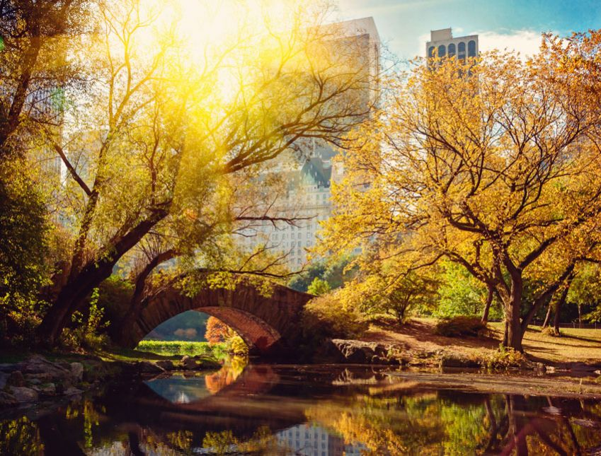 Central Park, New York. Photo: Shutterstock