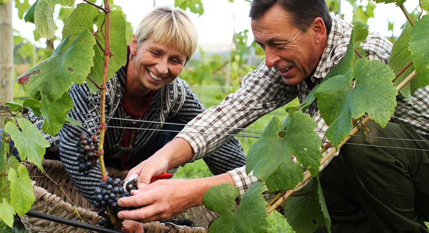 Wenche Hvattum and Joar Joar Sættem produces wine from both grapes and berries at their farm Lerkekåsa in Gvarv.