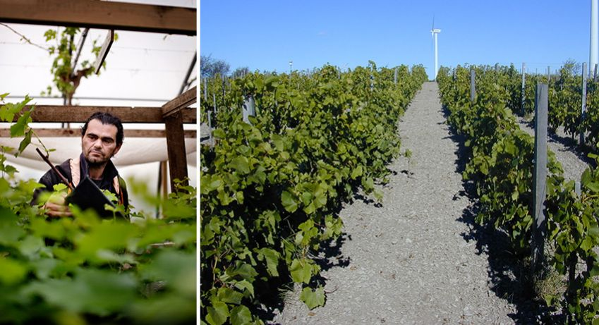 Left: Murat Sofrakis runs the vineyard in Klagshamn. Right: Gute Vingård, Gotland.
