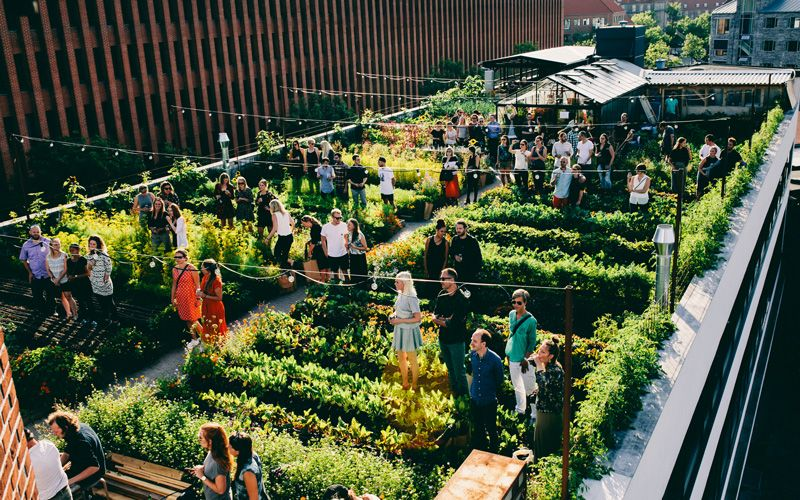 Østergro – the  first urban rooftop farm in Denmark. Photo: Cory Ben Brown